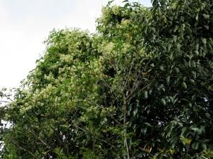 2 Flowers On Top Of Tree